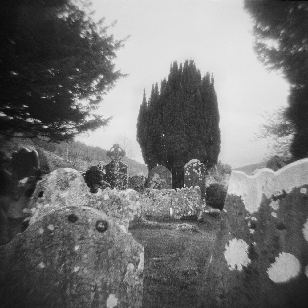 Untitled (cemetery tree), 2018