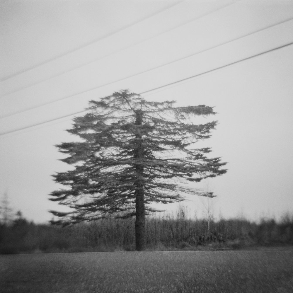 Untitled (tree without top), 2015
