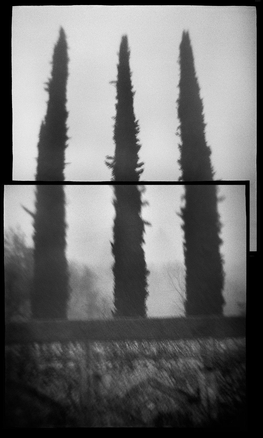 Untitled (cypress hedge), 2012