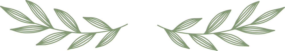 divider_1_green_trn.png