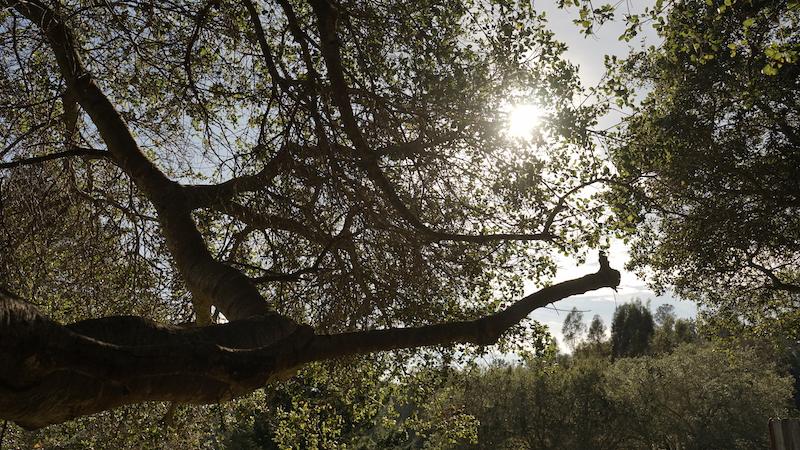 DSC01695 tree.jpg
