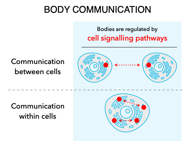 Cell signaling image 1.png