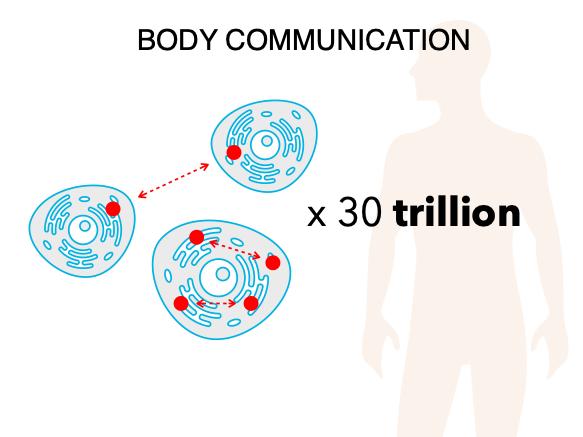 30 trillion cells.png