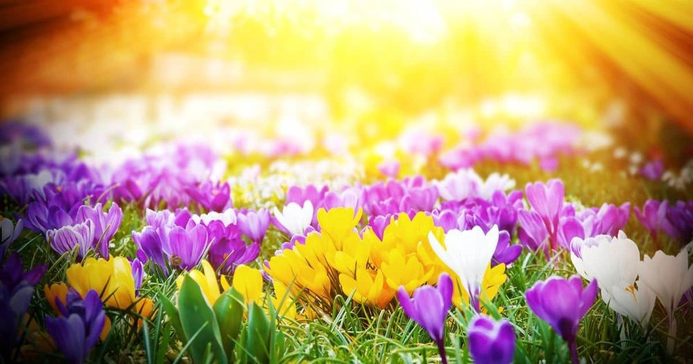 APRIL HEALTH TIP - ALLERGIES - By Alonda Crockett RN, FNP-C and the staff at Farmers Branch Primary Care LLC   April 1, 2019Spring is here, flowers are blooming, and pollen is in the air. This is the time of year that many people suffer from allergies. Allergies are defined as a reaction from the immune system due to repeated exposure to pollen, grass, weed, mold, pet dander, shellfish, nuts, dairy products, fragrance/perfumes, etc. A simple change in atmospheric pressure can cause a flare up with your allergies. Once exposed, the immune system releases histamine, which in return causes irritation and inflammation to the airway, eyes, ears, and/or skin. Common symptoms are itchy/watery eyes, hives, sneezing, runny nose, fatigue, rash, etc. Common at-home treatments for allergies can be Sinus Rinses, Zyrtec, Xyzal, Claritin, Flonase, limited time outside or around irritant, allergy eye drops, etc. If you suffer from allergies and have tried these common at-home treatments, we would love to help you get control of your allergies along with other healthcare issues that you may have.Please do not hesitate to call our office for an appointment (972-784-0961) or walk in to have your healthcare needs taken care of. We hope to see you soon…