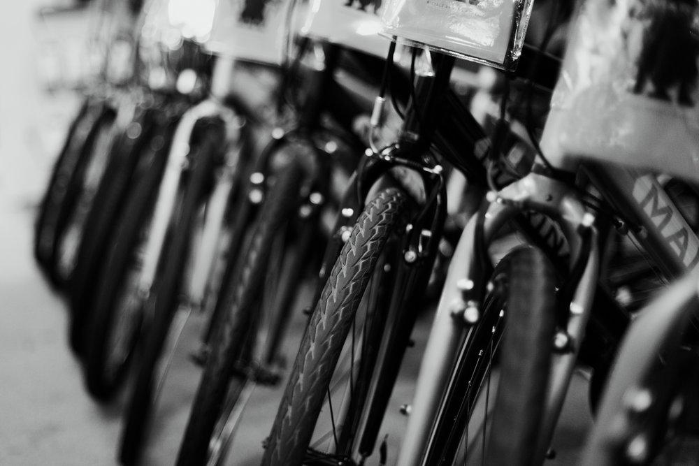 Wilsons_Cycle-16.jpg