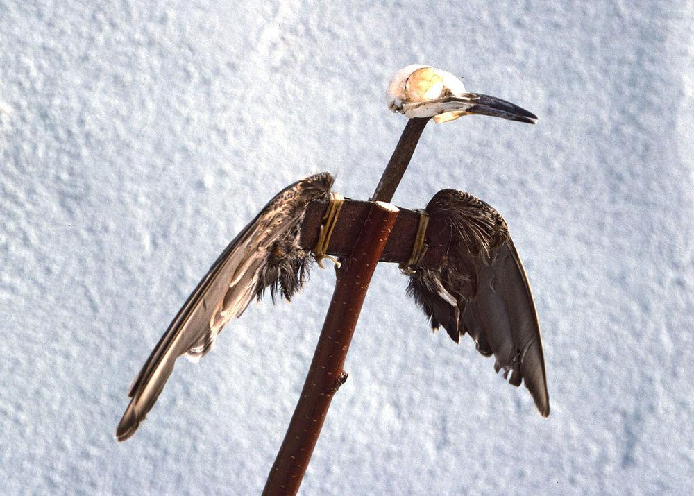 Bird_Tree_Land_Heart_detail 1.jpg