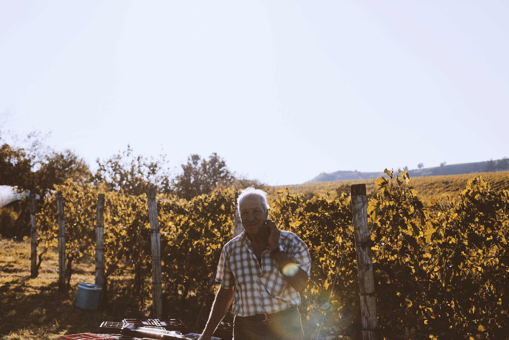 private guided langhe - monferrato vineyard walks