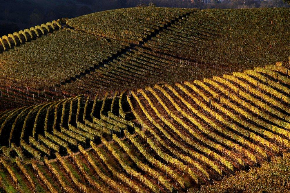 barolo wine tasting vineyard tour