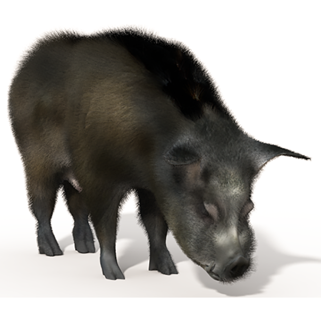 Textured_Pig 2.png