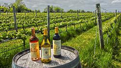 Mattabella Vineyards.jpg