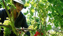 One Woman Winery _ Vineyards.jpg