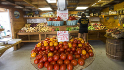 Country View Farm Stand.jpg