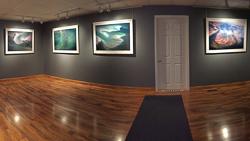 Alex-Ferrone-Gallery-interior-grey-space with artwork on display.jpg
