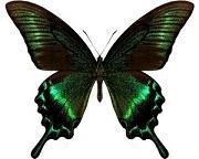 butterfly-1402279.jpg