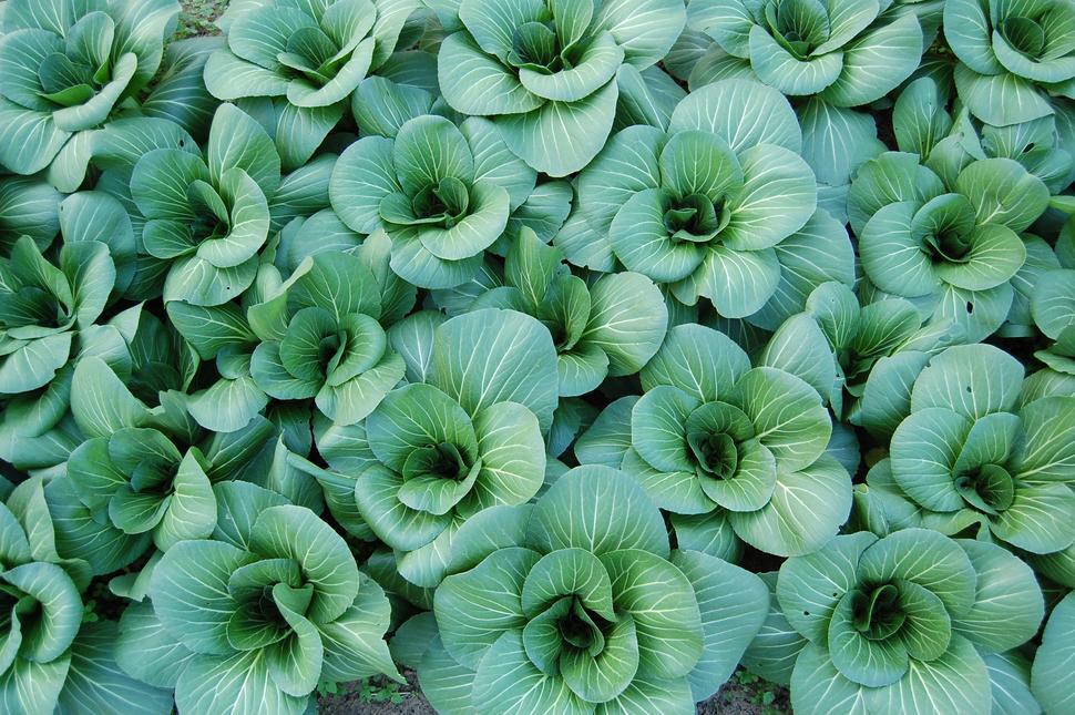 Theresa Ryan - plants2.jpg