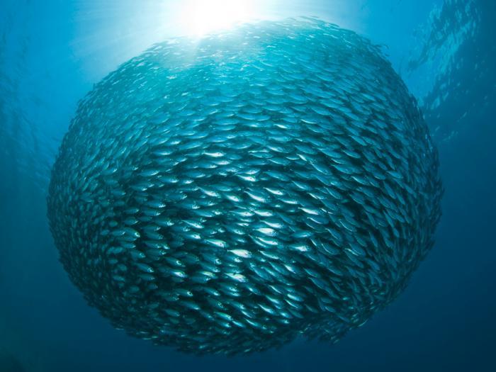 school of fish 3.jpg