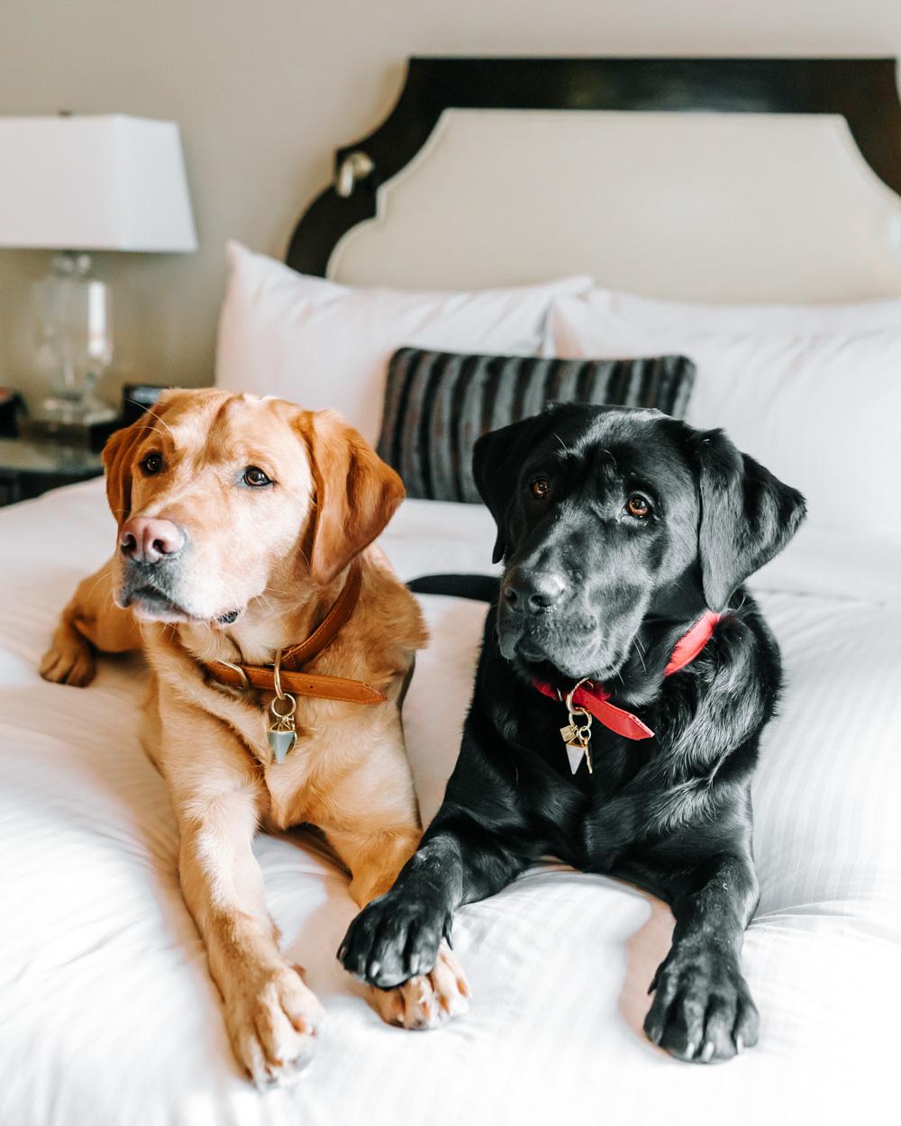 Fairmont Photo Tea Dogs Art-DSC07909 (002).jpg
