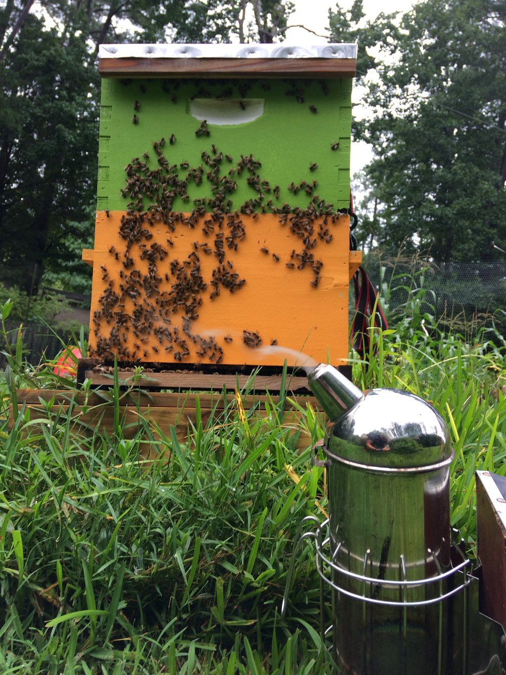 "About - Our ""Host-A-Hive"" program offers a way for YOU to make a positive impact on the local honeybee population. By hosting a hive you support our work in bringing the magic of beekeeping right to your very backyard!"