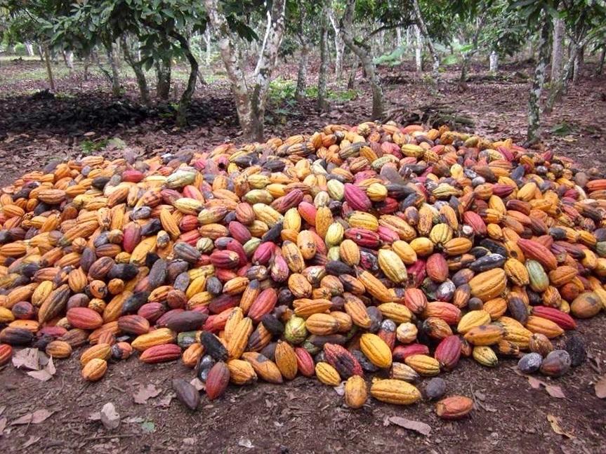 wild-cacao-10.jpg