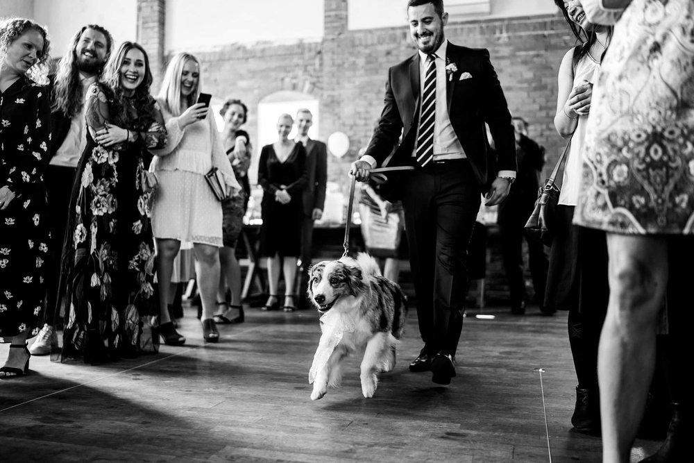hund-som-ringbærer-til-bryllup.jpg