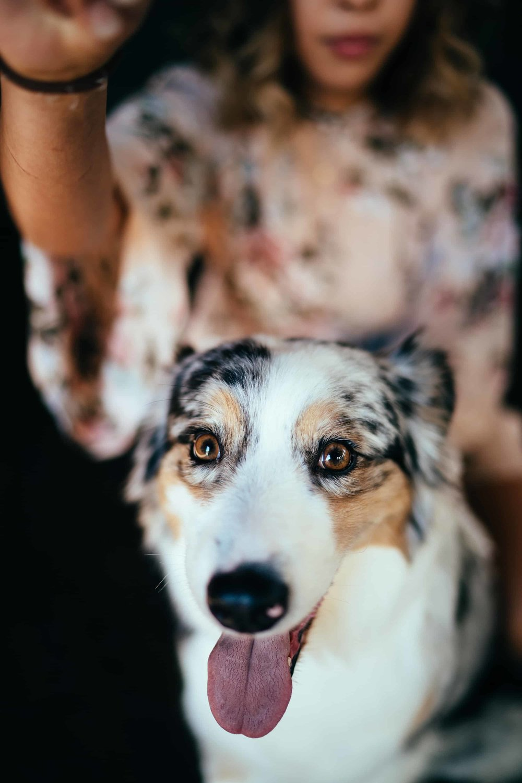 sød-hund.jpg