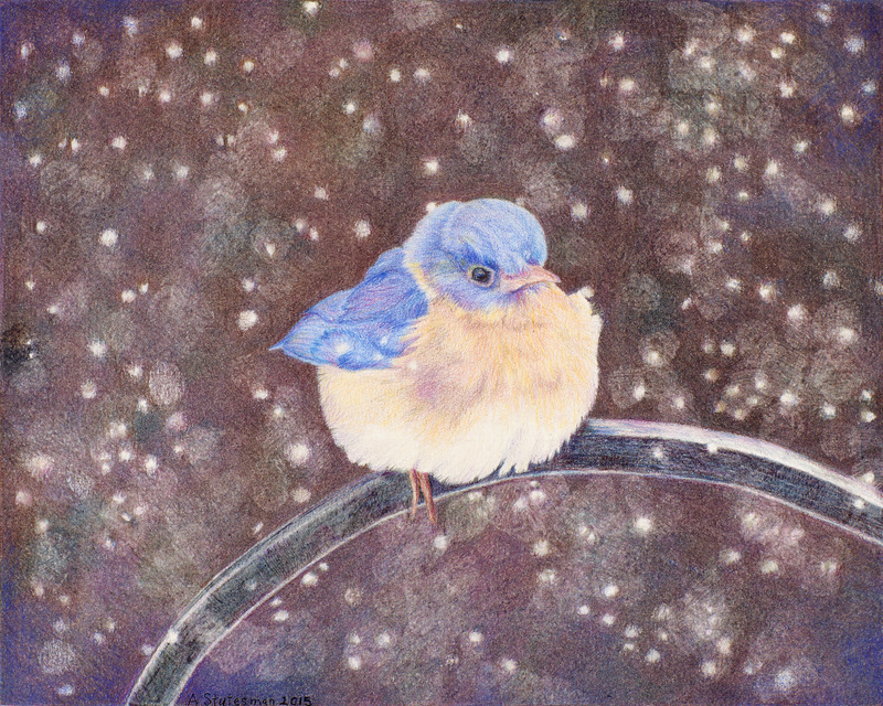 """LITTLE SNOWBIRD"",  Color pencil on Bristol Paper,  8x10 inches,  IN PRIVATE COLLECTION"