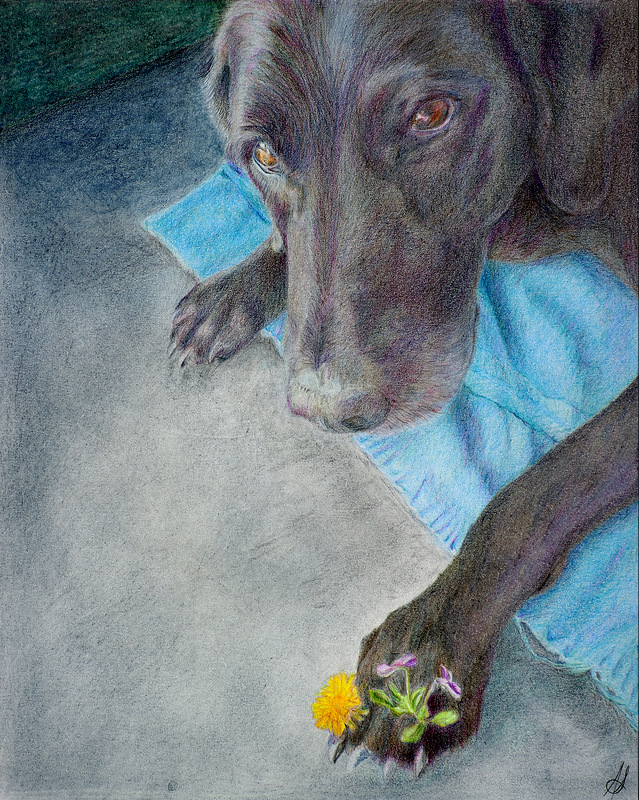 """ROXY"",  Color Pencil on Bristol Paper,  8x10 inches,   SOLD"