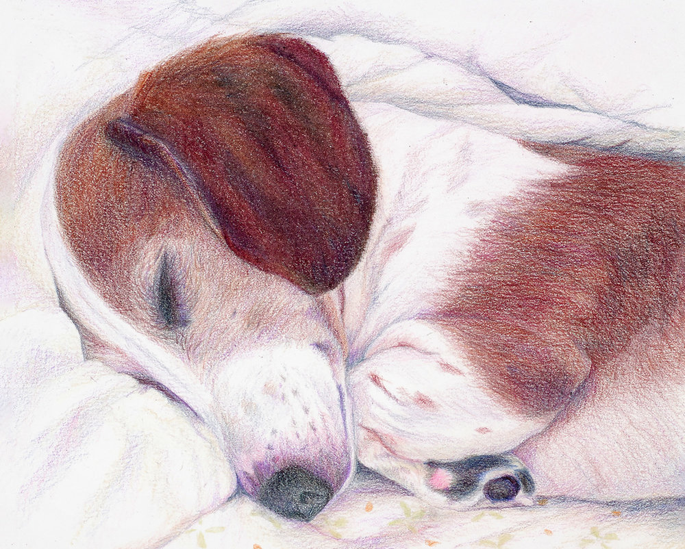 """HEMI'S NAP"",  Color Pencil on Bristol Paper,  8x10 inches,   SOLD"