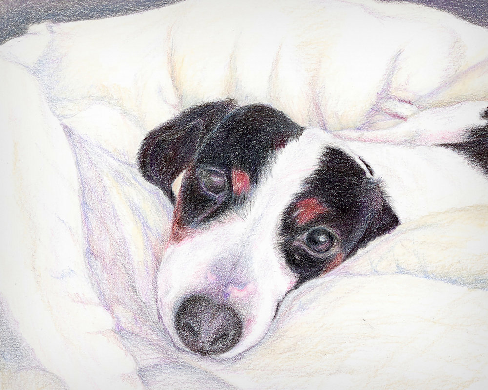 """BELLA"",   Color Pencil on Bristol Paper,  8x10 inches,   SOLD"