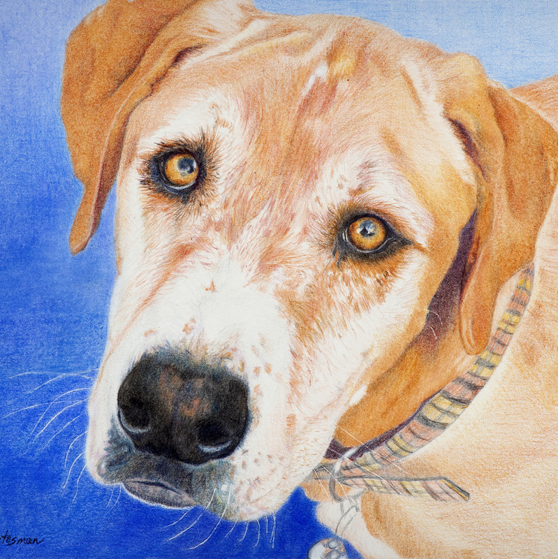 Andreas Stutesman, Colored Pencil, Dog Paintings-005.jpg