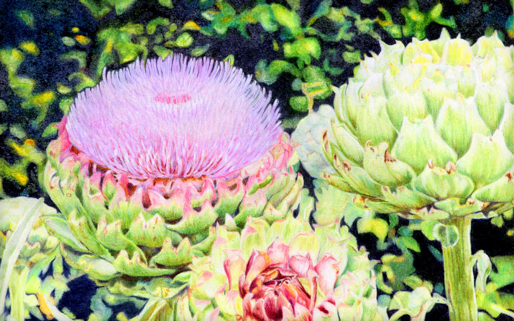 ANDREA STUTESMAN, Colored Pencil Nature Painting, Asheville, NC.jpg