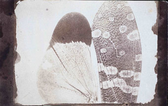 - Calotype negative of Insect wings, as seen in a solar microscope, c.1840 by William Henry Fox Talbot. National Media Museum Collection.