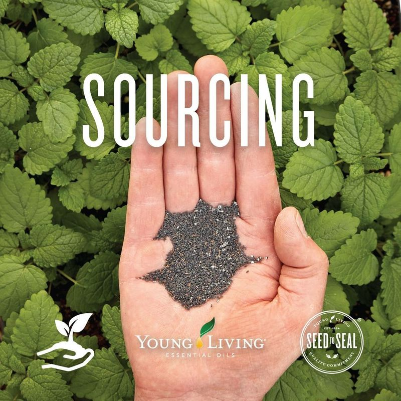 Sourcing ingredients for essential oils