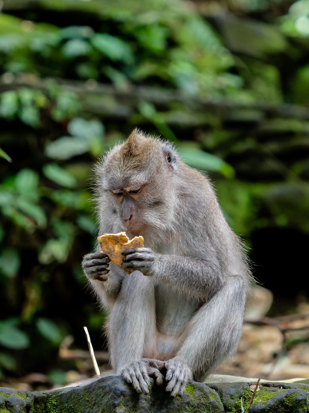 Seth T. Buckley Photojournalism - Balinese Road Less Traveled - Ubud Bali Indonesia Photography