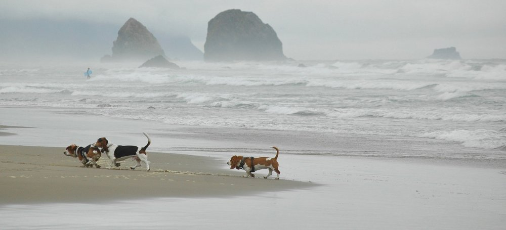dogs running on beach.jpeg