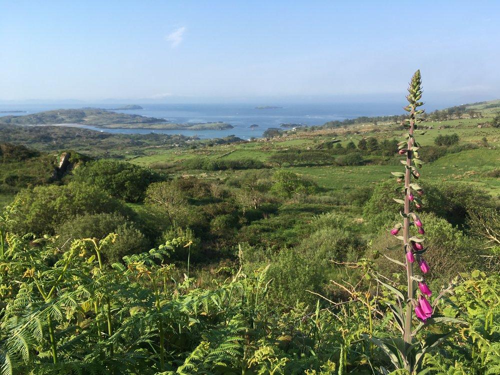 Overlooking Derrynane Harbor