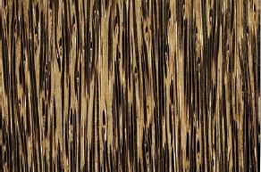 An exmaple of Sugar Palm