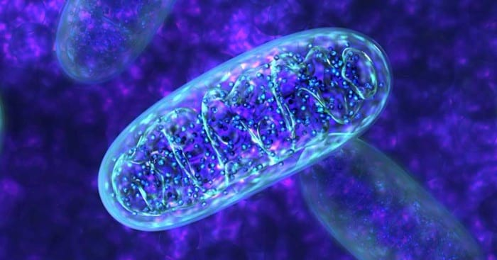 Mitochondrial Health -
