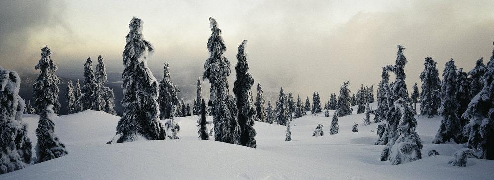 2019_XPAN_Cypress_SnowGhosts (1 of 1).jpg