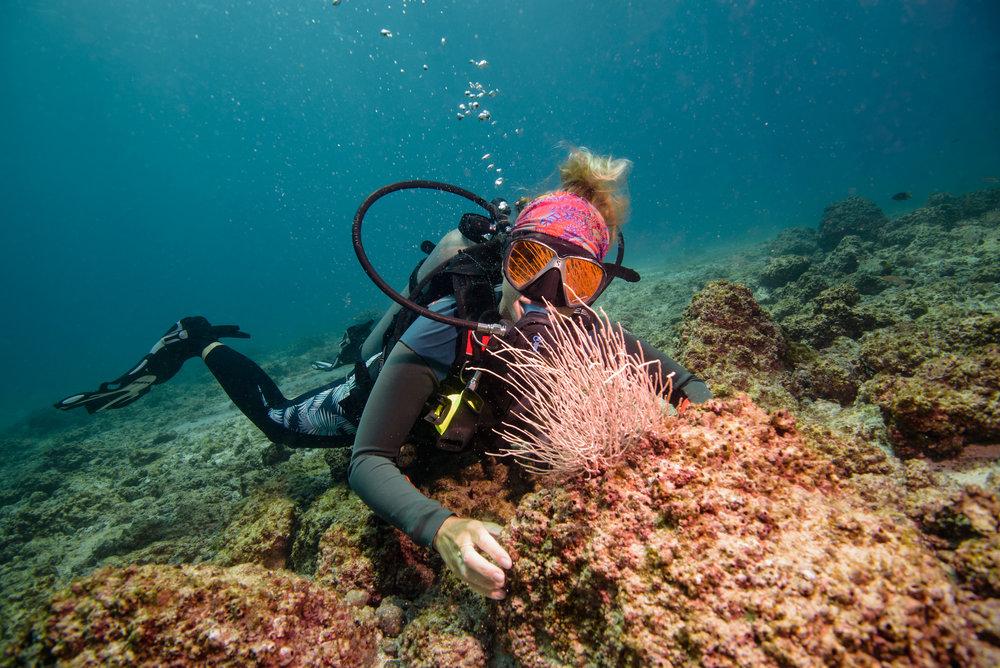 Costa Rica Scuba Diving.jpg