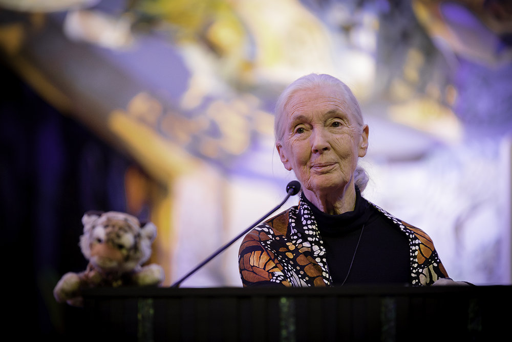 A strong and kind hearted Jane Goodall who offers enormous service to this world.