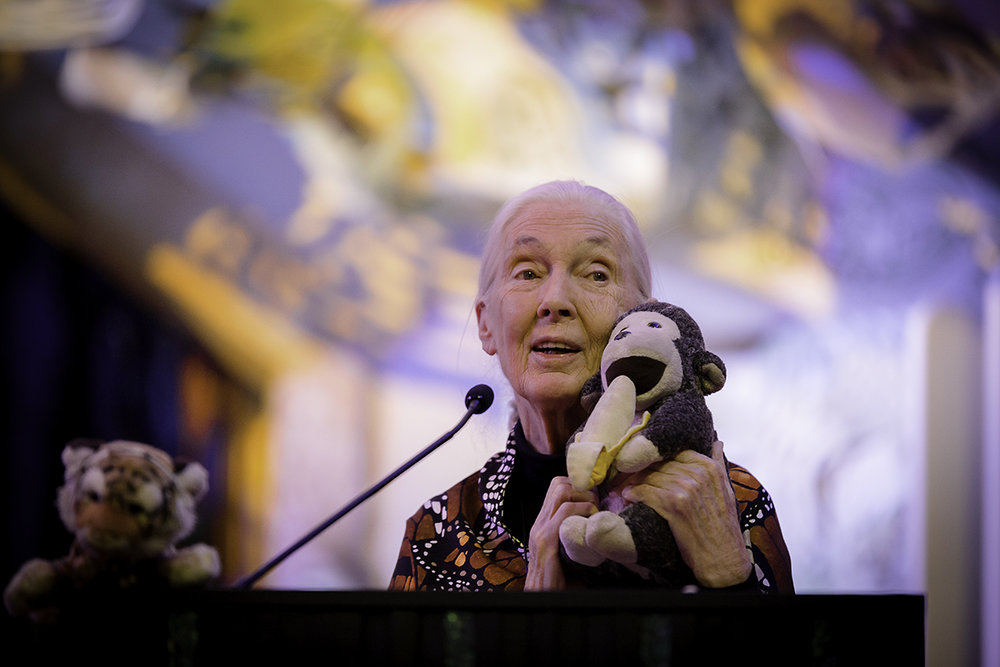 JaneGoodallPrint40 copy.jpg