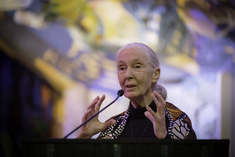 JaneGoodallPrint37 copy.jpg