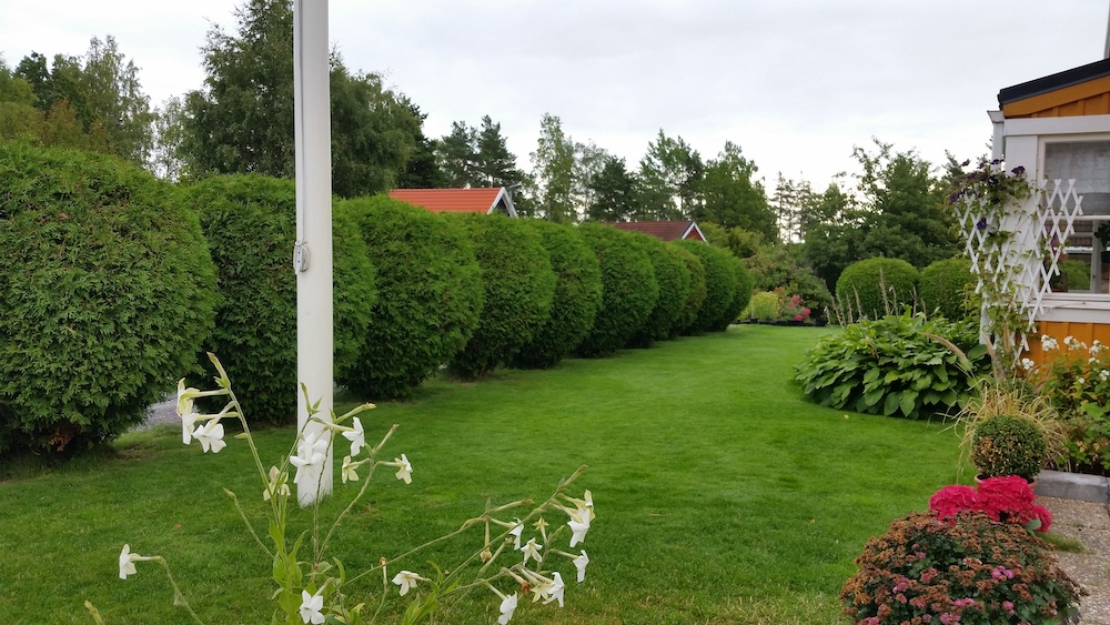 klippta-buskar-slottskogen.jpg
