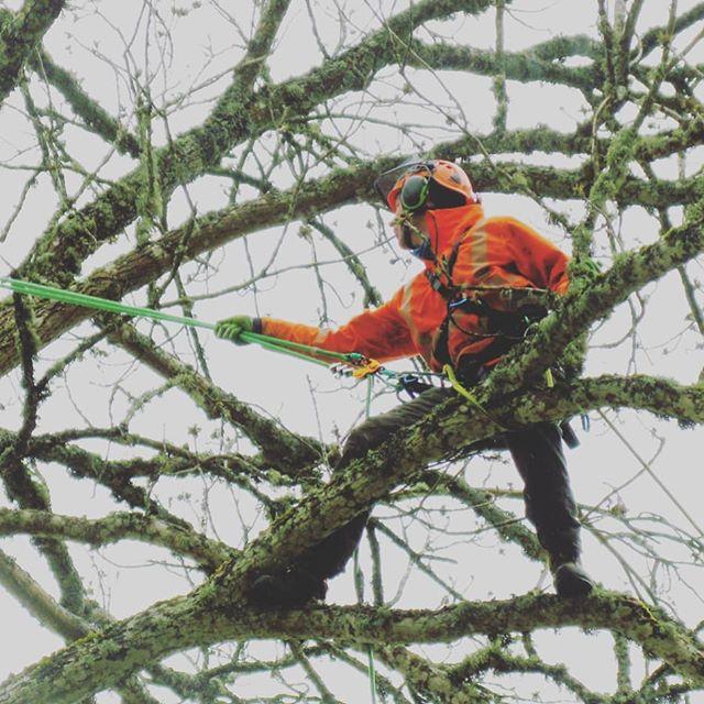 🇸🇪 Här har vi beskurit en enorm ask som är ca 150 år gammalt. Grymma vikingar som kämpar i snöovädret! 🌨️🌪️🍃🥽💪 🇬🇧 Here we have trimmed a huge ash tree that is about 150 years old. True Vikings fighting in the snowy weather! 🌨️🌪️🍃🥽💪 #trädfällning #trädbeskärning #trädgårdsskötsel #häckklippning #utemiljö #grävmaskin #transporter #gräsmatta #thuja #stubbfräsning #stubbe #plantering #arborist #trädklättring #sektionsfällning #kranbil #traktor #flis #tree #treecutting #stihl #stihlchainsaw #husqvarna #chainsaw #motorsåg @jpfacto
