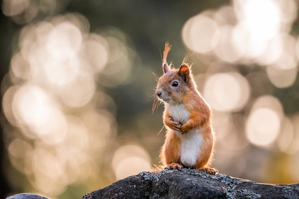 Squirrels - text here