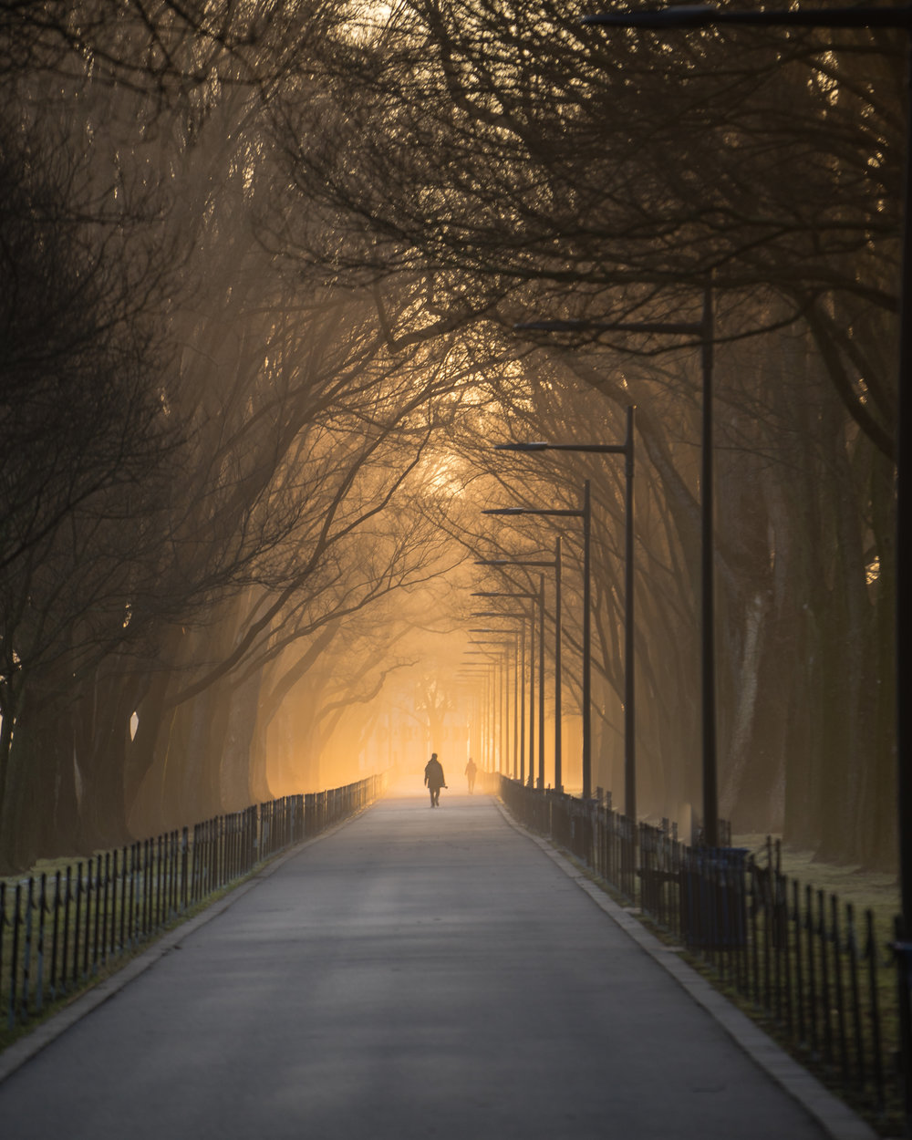 Glowing Stroll