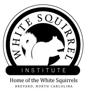 logo web.jpg