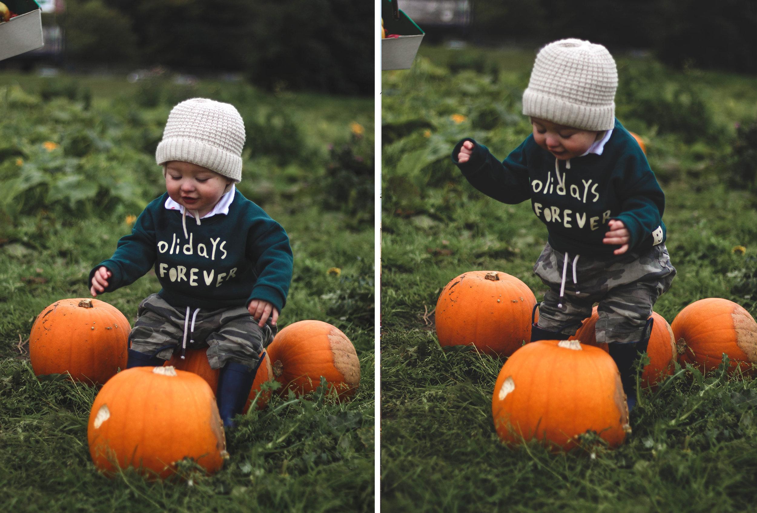pumpkin picking in scotland