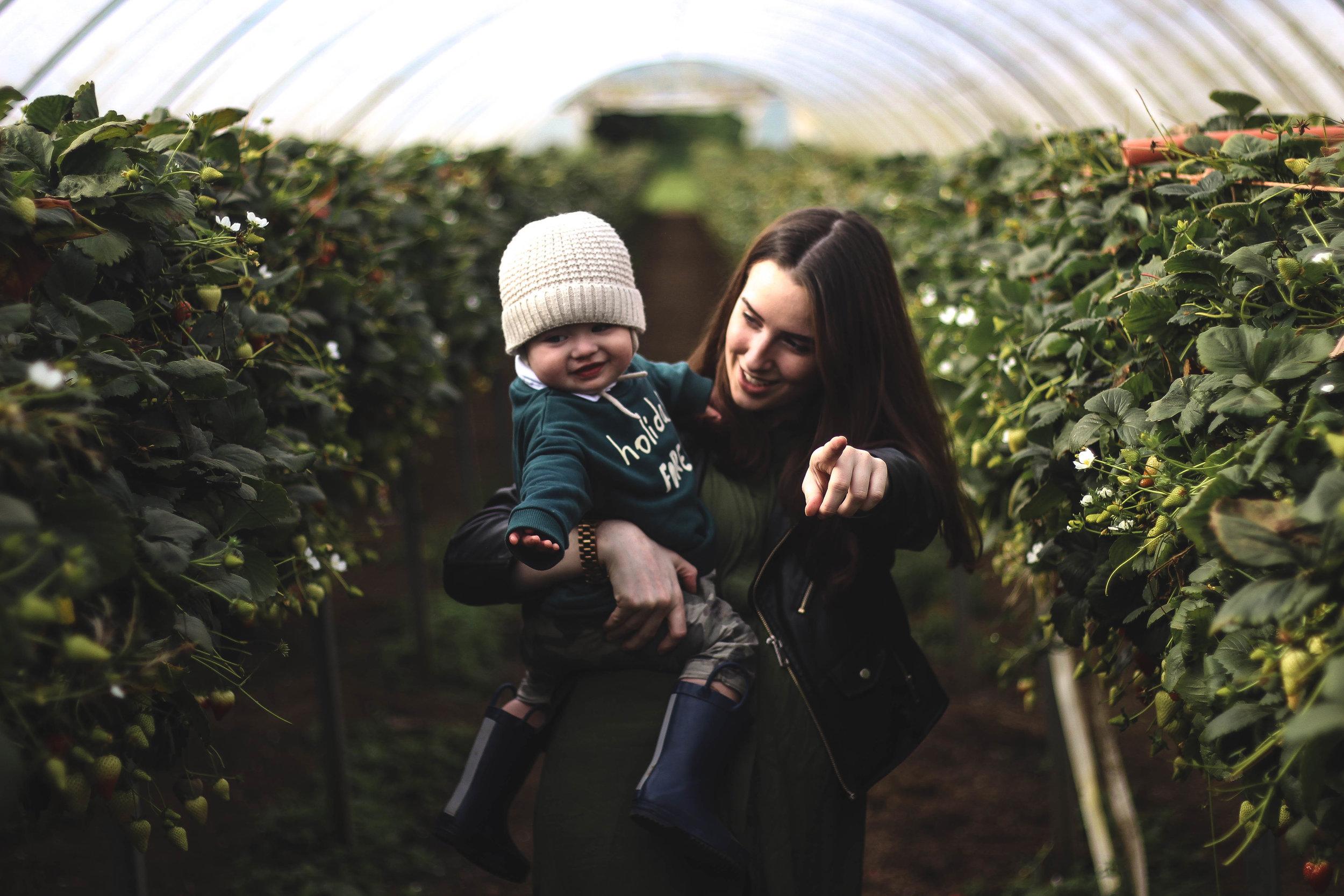 pumpkin picking craigie's farm in scotland strawberry fields